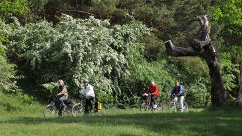 Radwandern im Müritz-Nationalpark